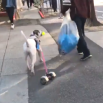 Vancouver-dog-video