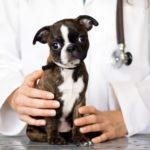 anti-vax-pet-world