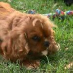 dog -eating-drugs