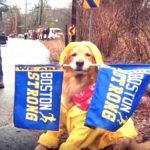 dog - Boston-Marathon