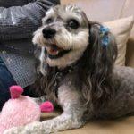 dog -cancer-treatment