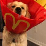 dog-owner -story