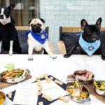 steak-restaurnt-for-dog