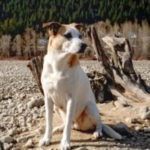 dog-rescue-Canada