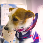 dog-on-airline-plane