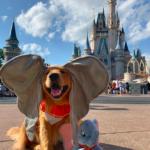service-dog - disney-trip