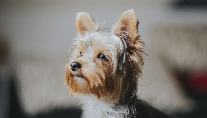 dog-experiment