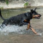 dog -rescued -Florida