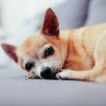 dog-hold-grudges