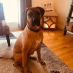 dog-red-spot