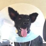 sick dog rescue