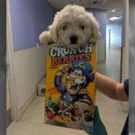 puppy -rescue