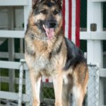dog safety tips for July 4th