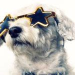 World cutest rescue dog contest
