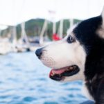 go boating with dogs