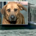 dog rescue in Lake Chicago