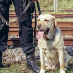 hero-dog-Canada
