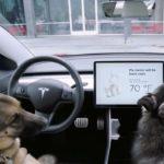 Tesla -dog-mode