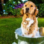 bathe a dog at home