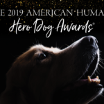 hero dog awards 2019