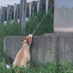 rescue dog Missouri