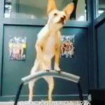 dog gym