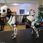 dog dressed as  skeleton