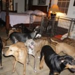 woman-shelters-97-stray-dogs-hurricane-dorian-bahamas