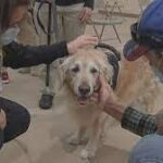 Therapy Dogs provide support to COVID-19 vaccine site workers.