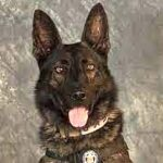 16-Year-Old Arrested After Allegedly Beating 'Amazing and Loyal' Police Dog to Death.