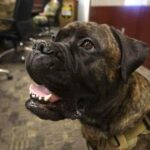 National Guard Therapy Dog Dies Weeks After Earning Alaska Commendation Medal.