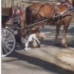Carriage driver trampled as Pit Bull attacks horse in wild video.
