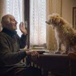 'The Truffle Hunters' And 'Stray' Are Top Dogs At 2021 Fido Awards For Best Canine Movies.