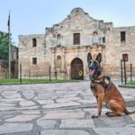 'Tails of the Alamo City' First-of-its-kind guide to benefit military working dogs.