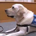 How a 'very good dog' is helping child abuse victims.