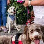 Therapy dogs comfort families of the missing in Miami building collapse.