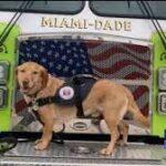 Aviation group owner donates plane to fly injured Surfside comfort dog home to Philadelphia.