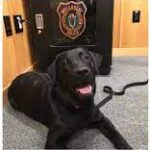 Police Track Down Puppy Stolen In Broad Daylight From Wellesley Home.