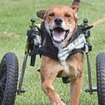 Boone now moves on to the finals of the American Humane Hero Dog Awards.