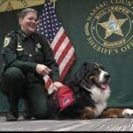 New Nassau County Sheriff's Office comfort dog puts his best paw forward.