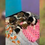Puppies on road to recovery after being thrown over side of Logan County bridge.