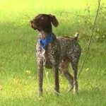 11-year-old boy finds man's missing support pet.