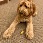 Cali, Cranston's comfort dog, stars in new coloring and activity book.