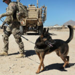 American Humane group says US left military dogs behind in Afghanistan.