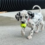 Sevierville Fire Department welcomes new station dog 'Ember'