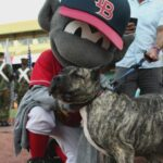 Ethan the dog 'throws' first pitch at Louisville Bats game.